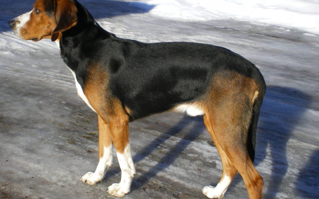 Månadens Hund Maj